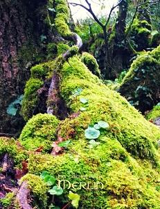 Brocéliande, une forêt enchantée